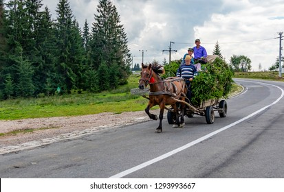 Transylvania, Romania - July 30, 20018: A horse pulling a cart, in which three people are sitting on a cargo of spruce branches. Photographed on a country road in Transylvania, Romania