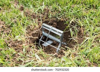 Trap for moles view