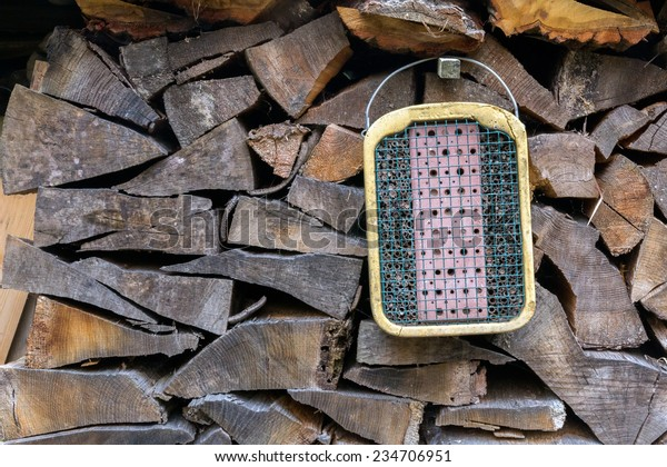 trap for termites on a pile of wood