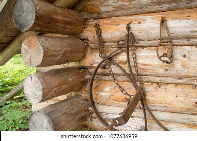 Traps for fur animals hang on an old trappers cabin in Northern Ontario Canada