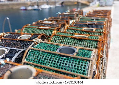 Traps for seafood, octopus and squid fishing