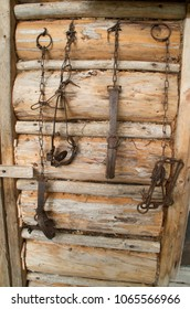 Traps for various animals hang on the wal of a trappers cabin.
