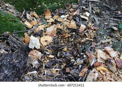 Trash after fire