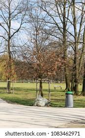 trash next to tree in park in czech republic in prague