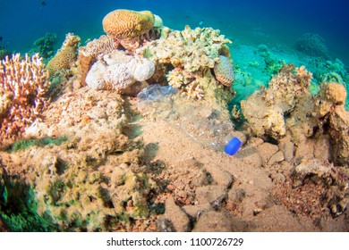 Trash Plastic Bottle lying on top of a beautiful coral reef