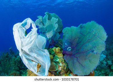 trash that has been dumped into the ocean has found its way onto the reef where it will damage delicate marine life. This kind of pollution adds to climate change
