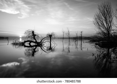 Trasimeno lake (Umbria) at sunset, with trees and branches coming out of perfectly still water and sun low on the horizon