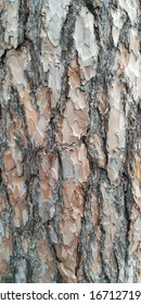 Trassed rough wood bark texture.  Wallpaper.