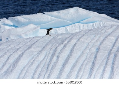 Travel among the Antarctic ices. Global warming on the planet and climate changes. Fantastic landscapes of the Southern continent. Majestic glaciers.