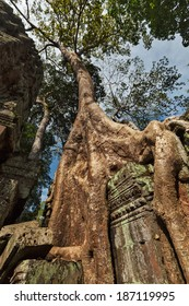 Travel Cambodia concept background - ancient ruins with tree roots, Ta Prohm temple, Angkor, Cambodia