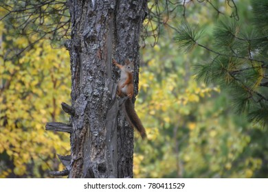 Travel to the city of Nadym. The squirrel.