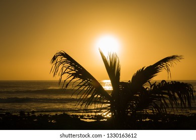 travel concept and background with the silhouette of a palm tree and a beach at sunset in backlight