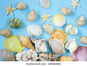 Travel concept pattern made of variety of sea shells