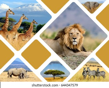 Travel Concept With Photos Collage Wild African Animals
