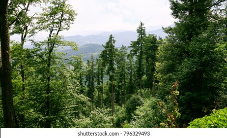 travel to France - green Black Forest (Schwarzwald, Foret-Noire) Woodland in Vosges Mountains in Alsace