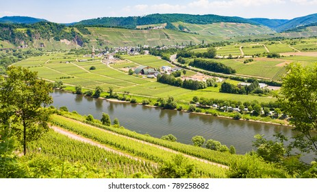 travel to Germany - above view of vineyards and gardens in valley of Mosel river in Cochem - Zell region on Moselle wine route in sunny summer day