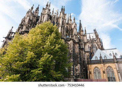 travel to Germany - green tree and Cologne Cathedral (Cathedral Church of Saint Peter) in september