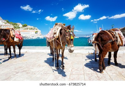 Travel Greece. Donkeys and Horses the only means of transport at Hydra island, Saronic Gulf, Greece