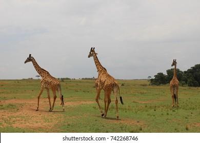 Travel in Kenya