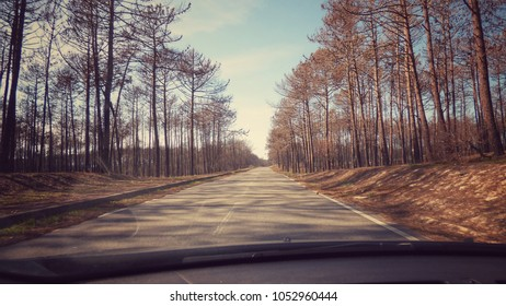 travel on a road with pine