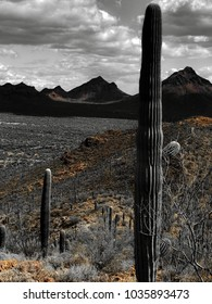 Travel Outdoors - Experience The Sonoran Desert