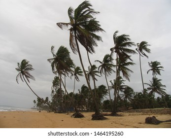 Travel view of Goa featuring beach palms Colva. The image location is India in Asia.