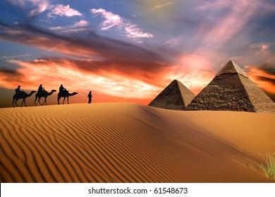 Travel vith camel