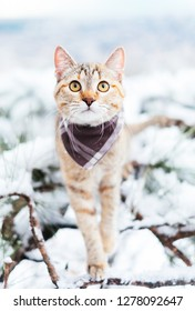 Traveler cat of ginger color wearing in bandana walking in winter outdoor.