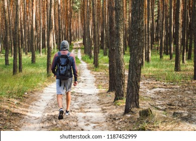 Traveler man walks with a backpack on a dirt road in a pine fore