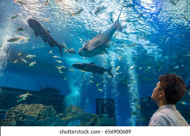 Traveler or tourist is looking at fishes in freshwater aquarium. Man is an Asian people.