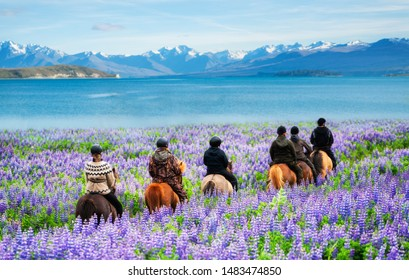 Travelers ride horses in lupine flower field, overlooking the beautiful landscape of Lake Tekapo in New Zealand. Lupins hit full bloom in December to January which is the summer of New Zealand.