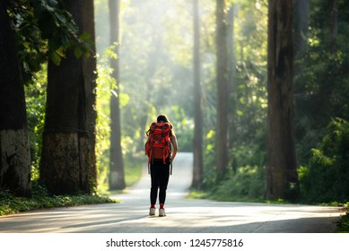 Travelers treking trekking bag backpacking, hiking and climbing to study the nature with in the rain forest with mountains and nature.