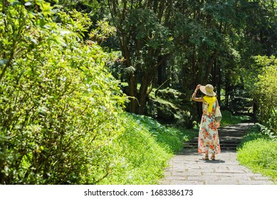 traveling Asian woman hiking in the forest at Xitou, Nantou, Taiwan