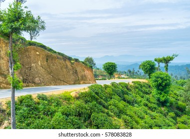 Traveling in central region of Sri Lanka, tea shrubs will be the main agricultural crops along the whole way