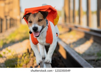 Traveling concept with dog with backpack walking and balancing on rail of railroad
