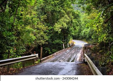 traveling the Daintree National Park, Queensland, Australia