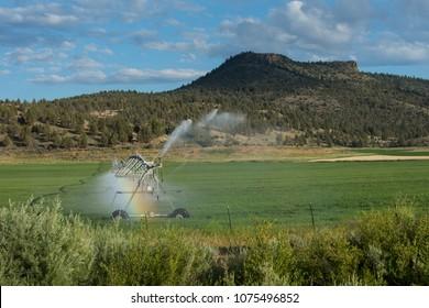 Traveling sprinkler irrigation system in rural Oregon, USA, on summer day.