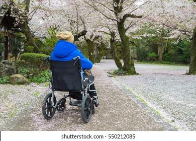 traveller using a wheelchair travel in spring sakura cherry blossom of japan