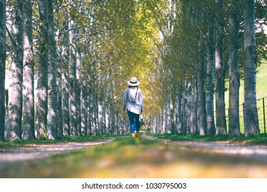 A traveller woman walks in the middle walk way of green pine Forrest in summer in New Zealand.