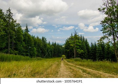 travellers are walking in the mountains with yellow and green grass valley and high trees blue sky and grey and white clouds