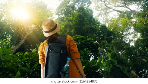 Travelling woman with backpack enjoying on exploring and trekking in tropical rain forest of Asia, Tourist traveler on background view nature and ecotourism.