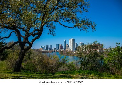 Travis Heights Overlook Amazing Tree Twisting above the Austin Texas Skyline Colorado River. Spring time in Austin 2016