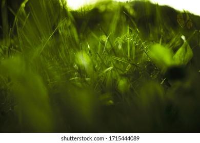 Trawa na polu podczas wschodu słońca. Krajobraz rolniczy w okresie letnim - Shutterstock ID 1715444089