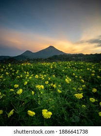 Trawas is a village with beautiful sunrise and sunset views with many terraced rice fields. This village is located in Trawas sub-district, Mojokerto, East Java, Indonesia. - Shutterstock ID 1886641738