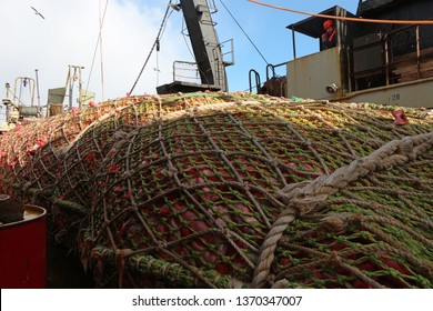 trawl full of red fish on the deck of a fishing boat