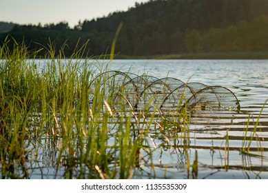 trawl in lake during sunset with reed bed
