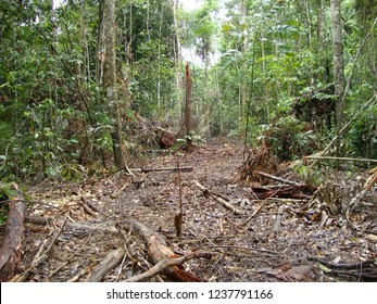 Trawling trail of wood logs exploited in native forest area of the Amazon region of Brazil