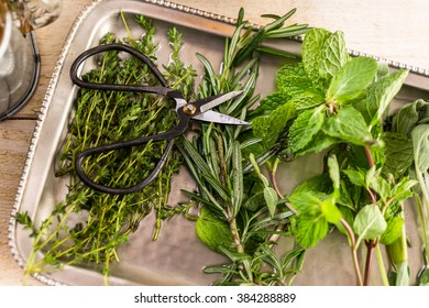 Tray with fresh mint, rosemary, thyme, and sage.