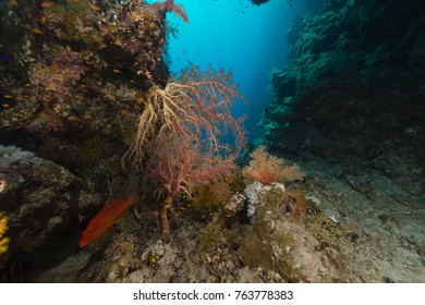 treasures of the red sea
