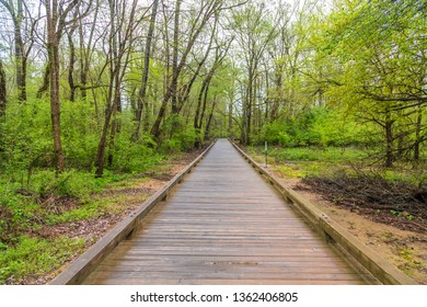 A treated lumber fitness trail through woods in the spring